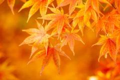 秋の到来ひやおろし