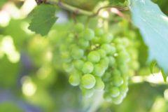 日本ワインコンクール2019 受賞酒はこんなワイン!